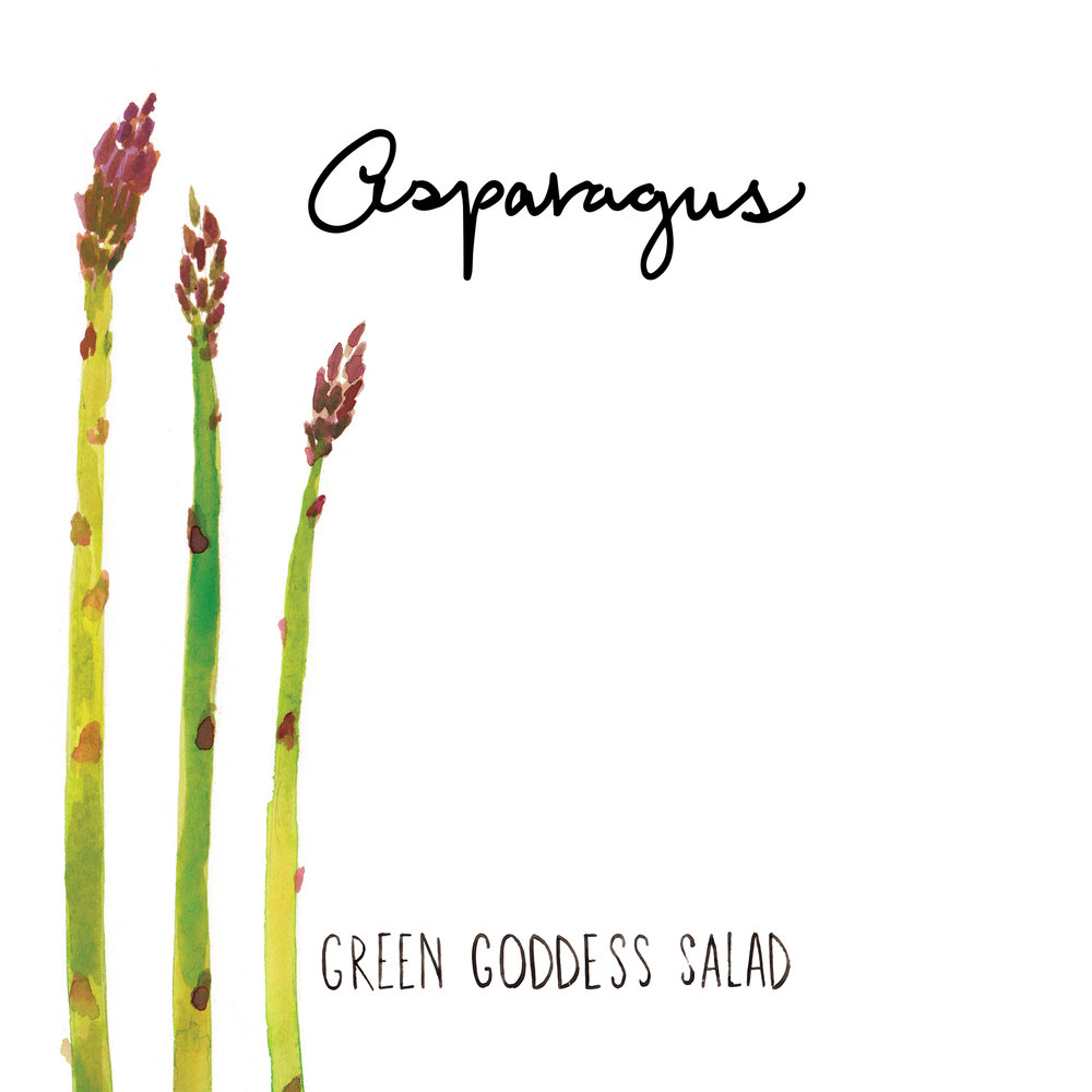 asparagus illustration jolly edition food illustration